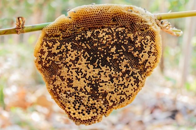 �C�mo actuar ante un enjambre de abejas?