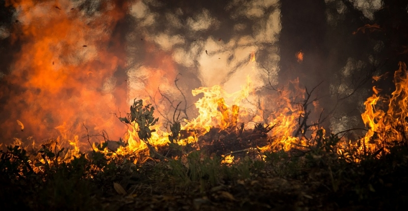 �Qu� hacer ante un incendio forestal?