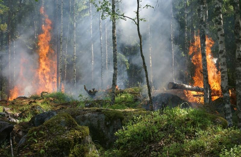 Espa�a registra el verano con menos incendios de la d�cada